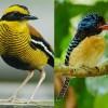 Borneo Bird Festival in Sandakan, Sabah, Malaysia