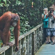 Sepilok Orang Utan Rehabilitation Centre is a popular stop on the Sandakan Wildlife Day Tour