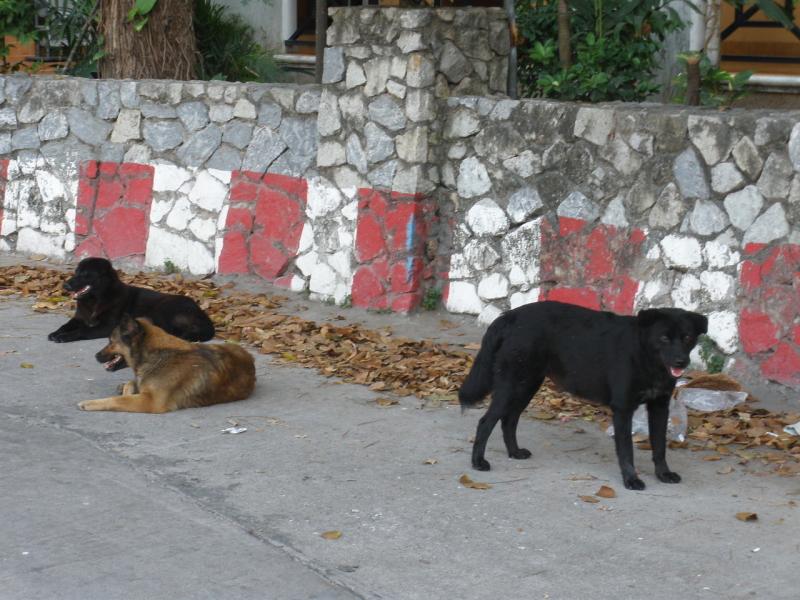 「タイ・野良犬に注意!」の画像検索結果