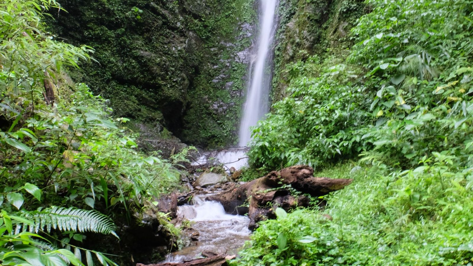 a photo of a waterfall in gunung leuser national park.