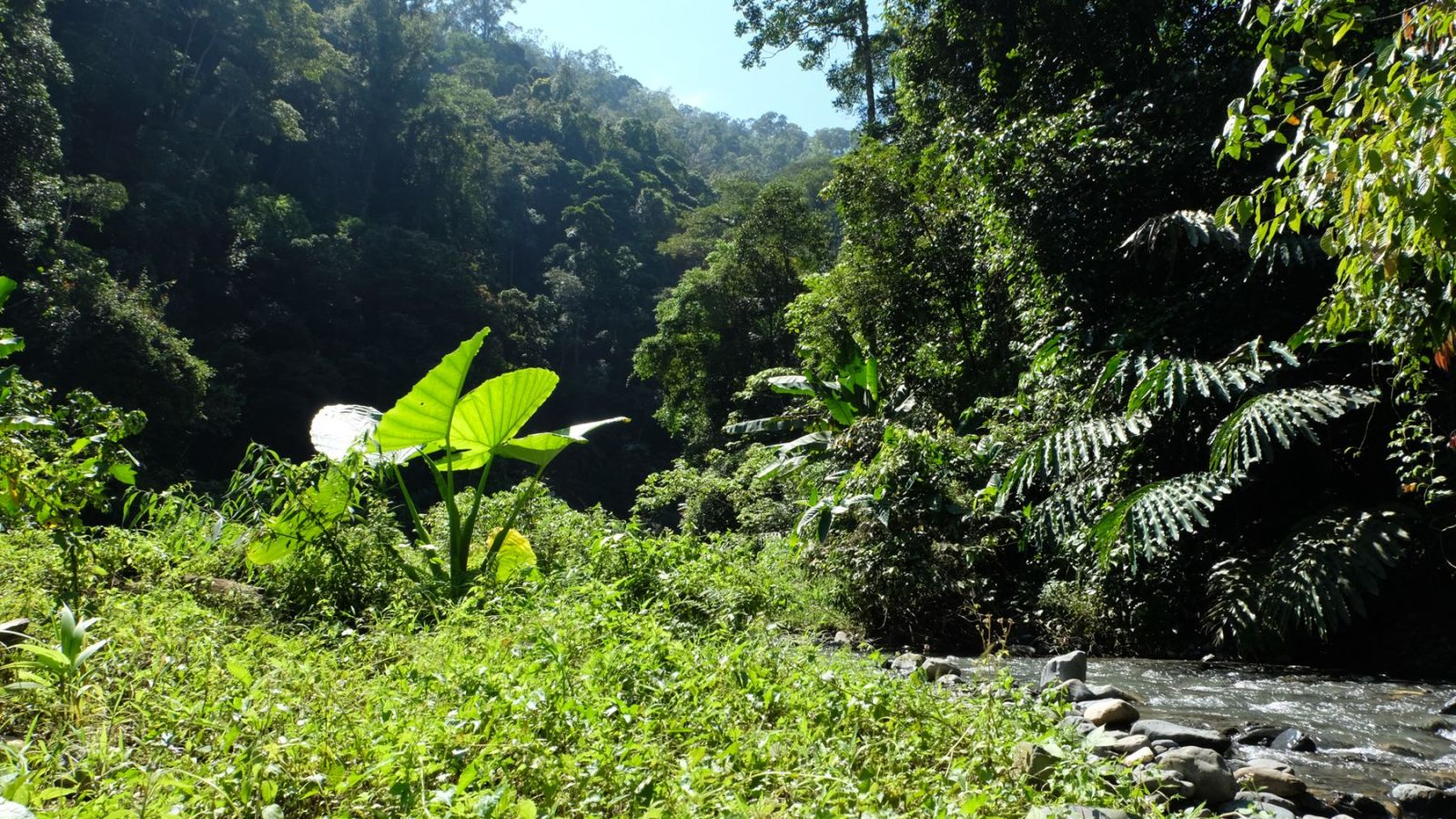 a photo of the river bed in the rainforest of gunung leuser national park.