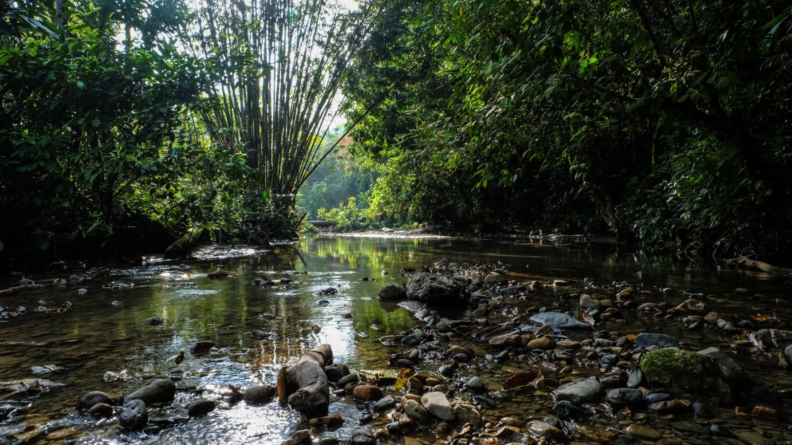 photo of a river in the rainforest in gunung leuser national park.
