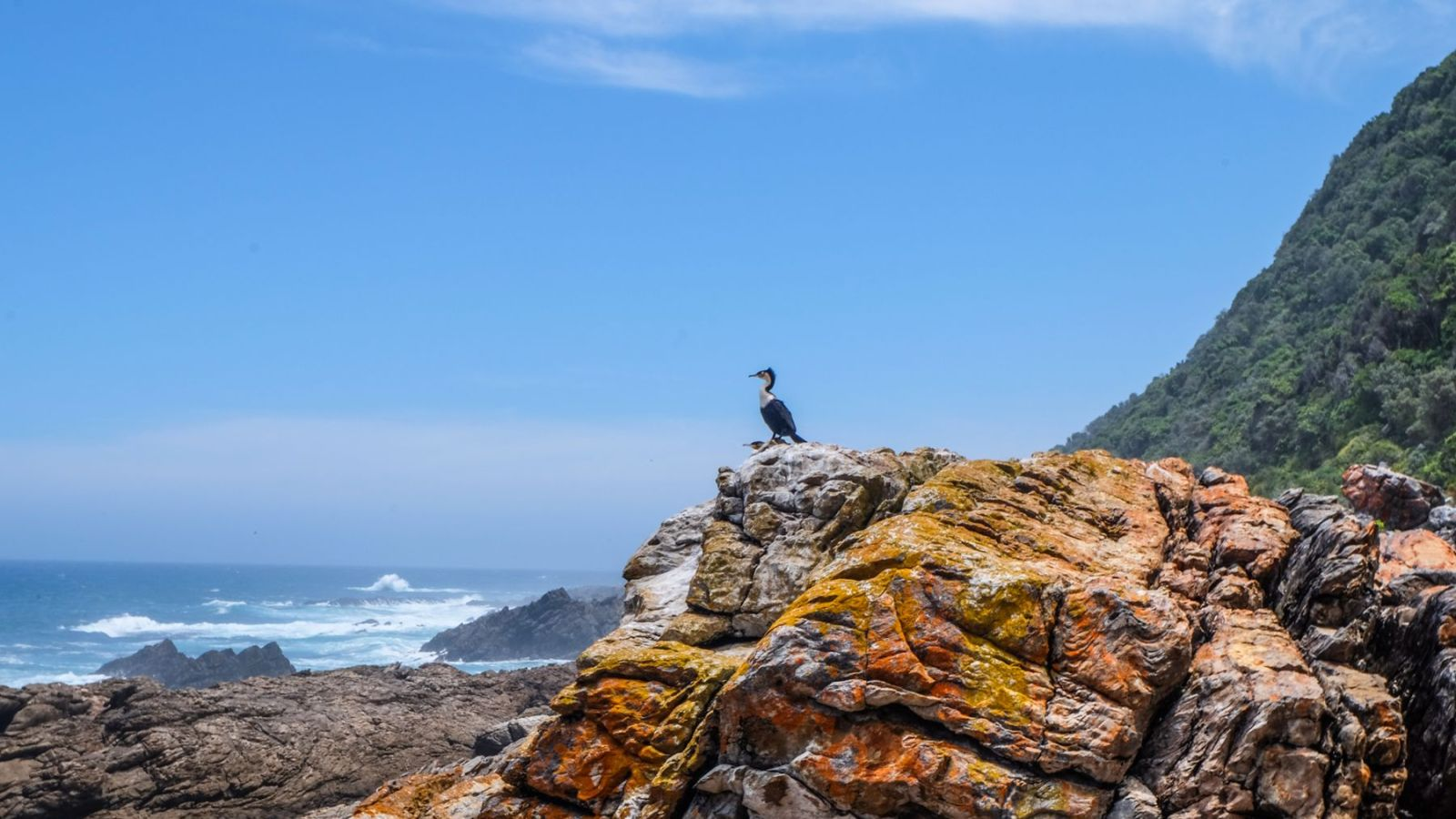 a photo of a cormorant on a rock on the coast