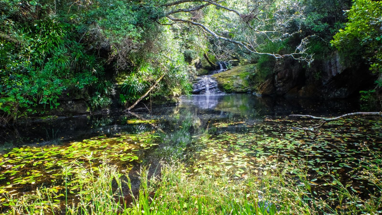 a photo of a pond with see lilies on the otter trail.