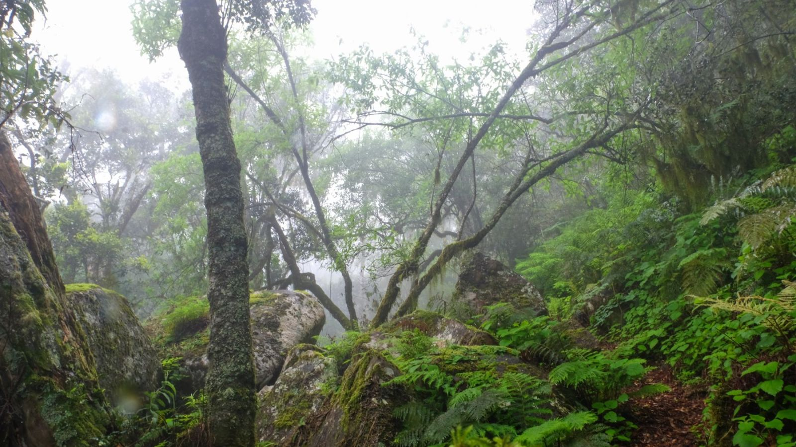 a photo of the misty forest on the amathole hiking trail.