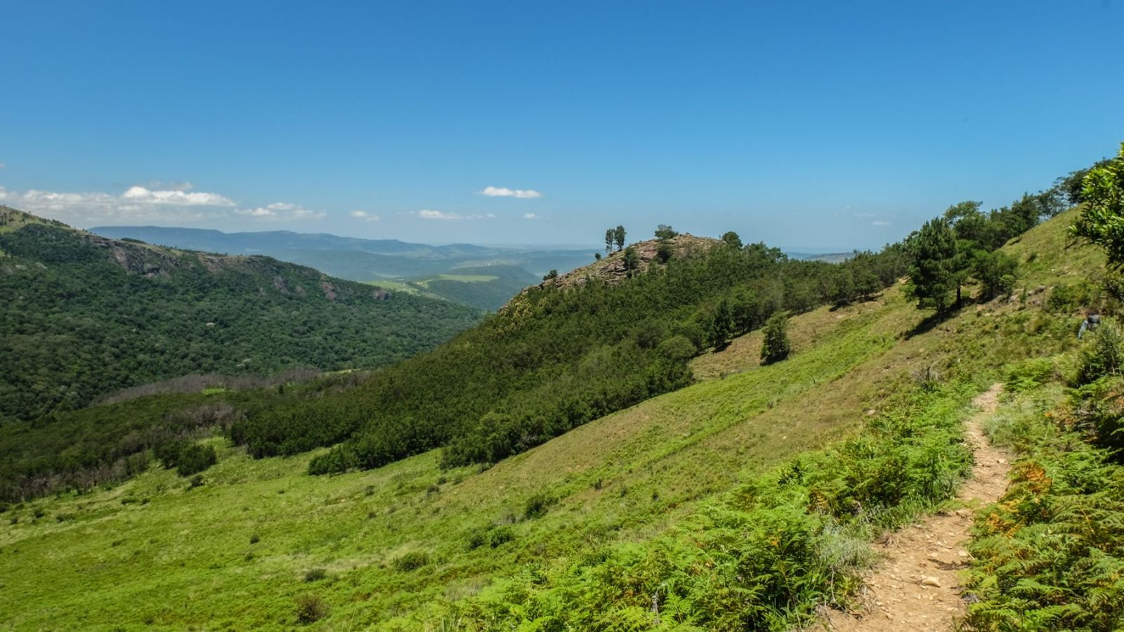 a photo of a valley from the top of a hill along the amathole trail.