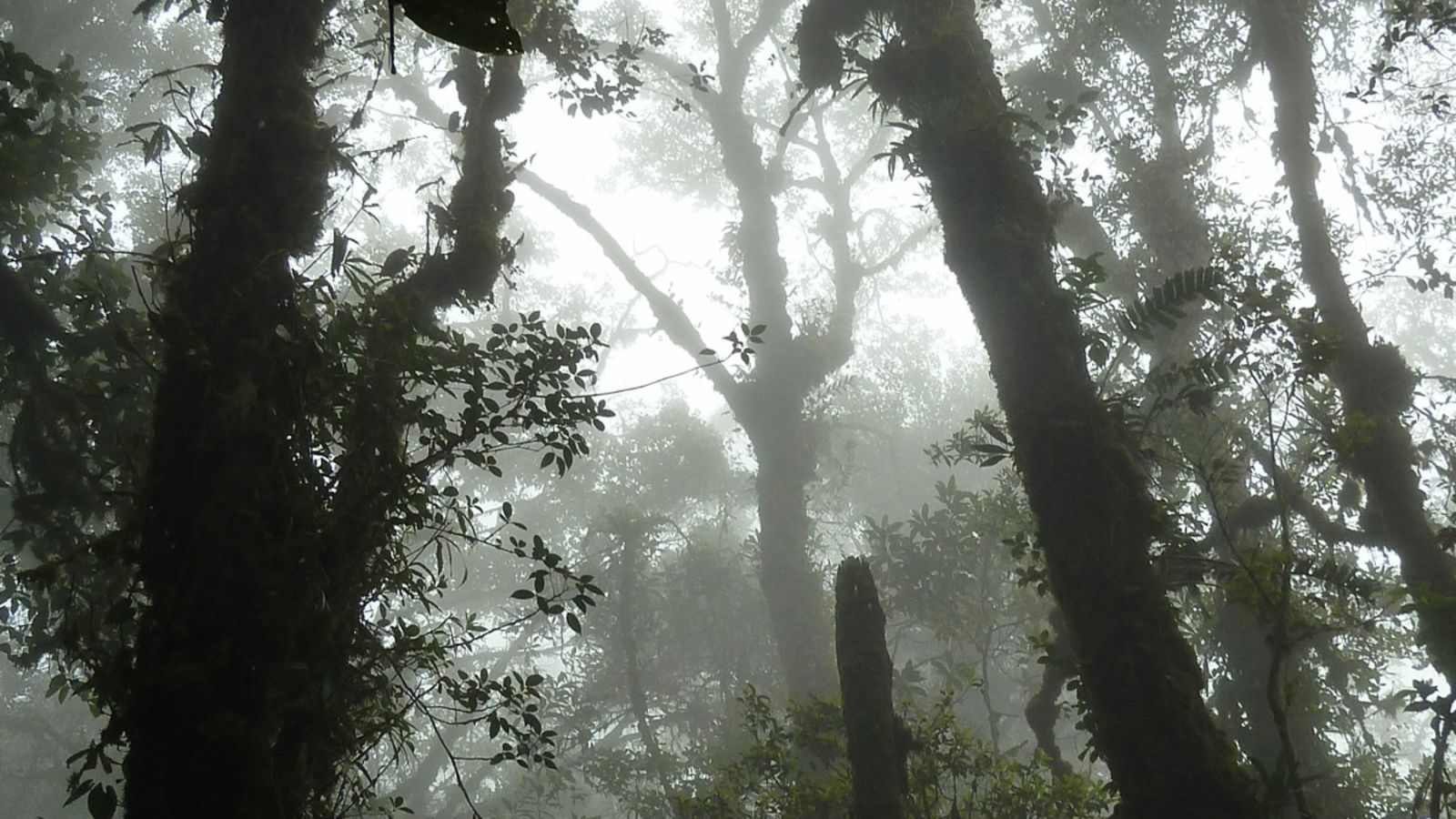 a photo of the misty tropical rainforest on top of a mountain in gunung leuser national park.