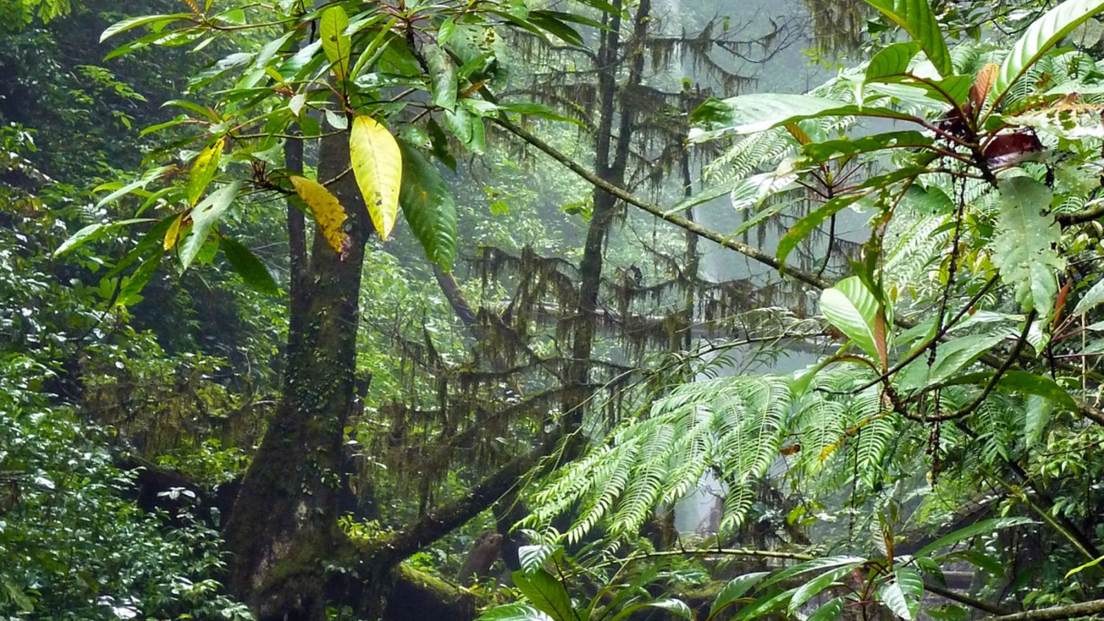 a photo of the tropical rainforest in gunung leuser national park.