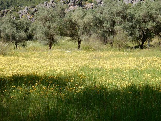 Orhaniye valley