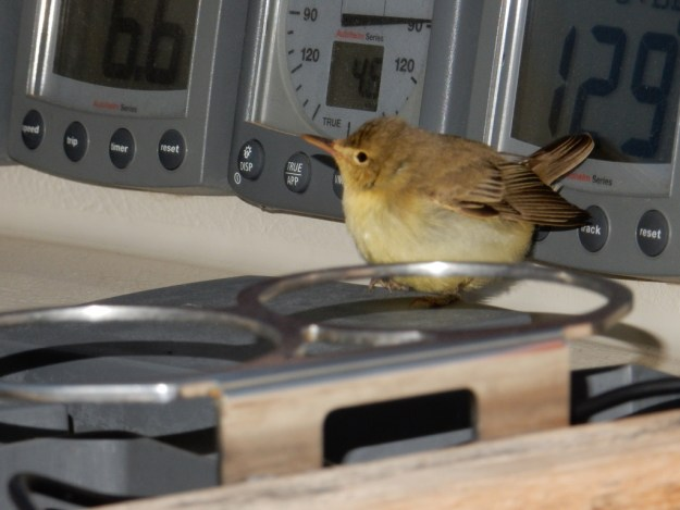 One of our bird passengers check out the instrument displays