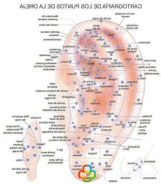 Puntos más destacados de la auriculoterapia