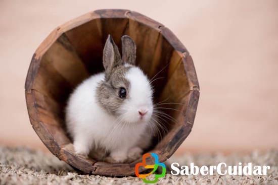 Conejo enano en un tronco pequeño