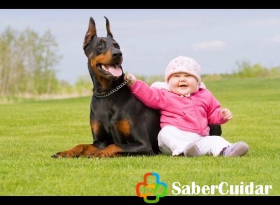 doberman acompañado de un bebé