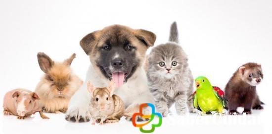 Diferentes mascotas