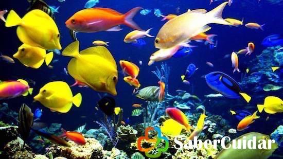 Diversidad de peces de agua salada