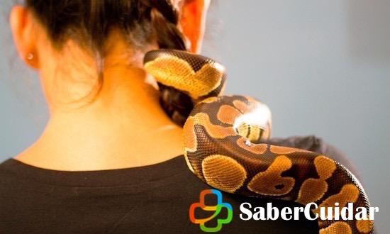Serpiente domestica en el cuello de un hombre