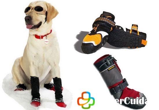 Zapatos para proteger las almohadillas de tu perro