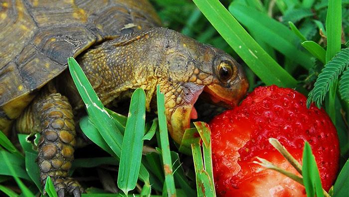 como cuidar a una tortuga