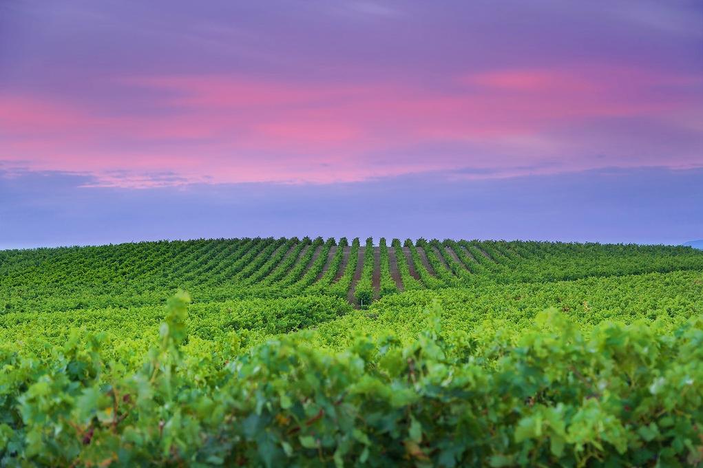 Mar de viñas, La Mancha