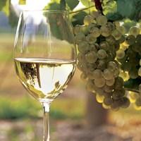 Enologia - Elaboracion de Vinos Blancos