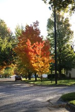 Fall Color.7235