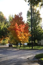 Fall Color.7236