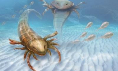 escorpion marino