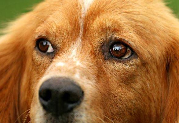 Así es como los perros ven realmente
