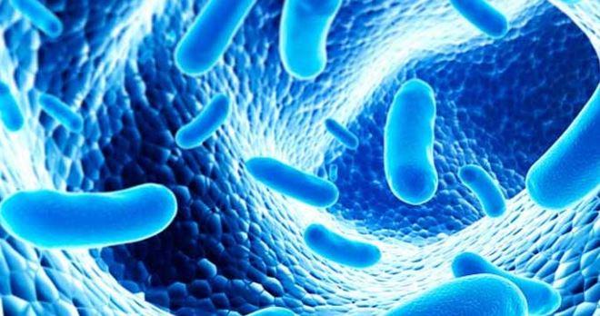 Las bacterias que benefician a tu cuerpo