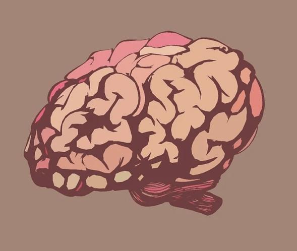 A los 25 años el cerebro madura completamente