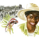 illustration-aquarelle-madagascar