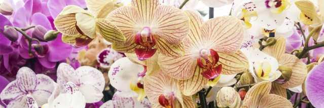 Orquídea vanda: llena de color tu hogar