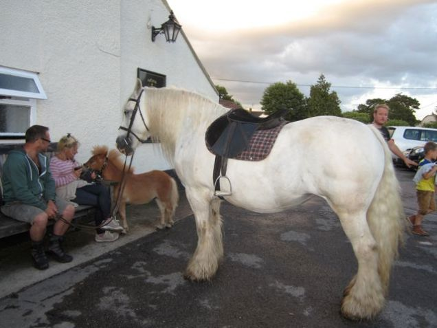 Bring the pony.. and miniature pony to the pub - Why not?
