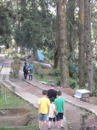 Pine trees on Gundaling Hill