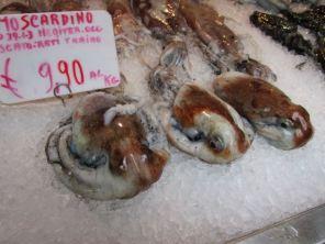 Octopus's