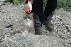 Katze im Gletschervorfeld
