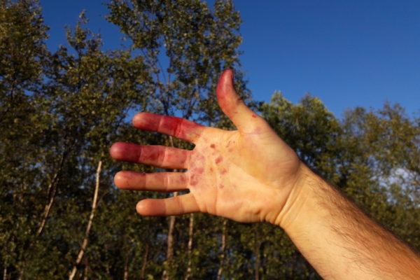 Heute erreichten wir mit der MS Midnatsol das Tor der Barentsee: Kirkenes. Bei Traumwetter wanderten wir an die Grüne Grenze von Norwegen und Russland. Und zwischendurch pflückten und verspeisten wir zahlreiche Heidelbeeren, was in einer man könnte meinen 'blutigen' Hand resultierte. Solche Flecken sind jedenfalls der Beweis, dass man die richtigen Beeren erwischt hatte und nicht die relativ einfach zu verwechslenden Rauschbeeren.