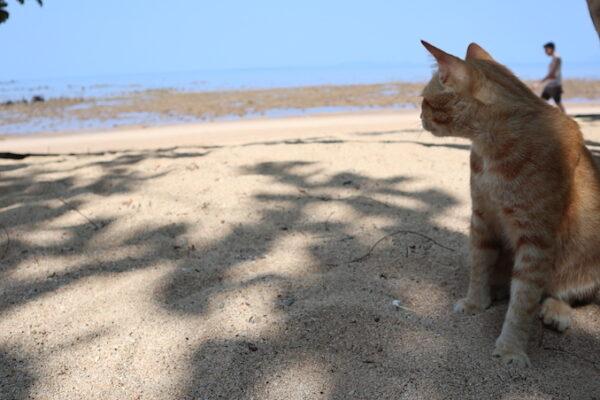 Koh Libong Katze
