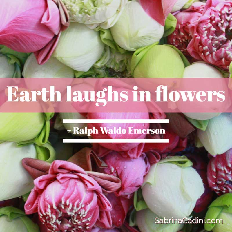sabrina cadini monday moves me earth day laughs in flowers quote business coach creative entrepreneurs