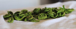 Westcoast Fiddleheads Blanched and Drying