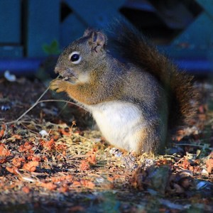 Sally Squirrel Eating Sunflower Seeds