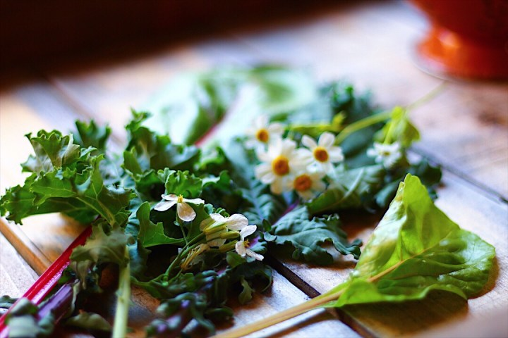 Variety of Salad Greens and Edible Flowers
