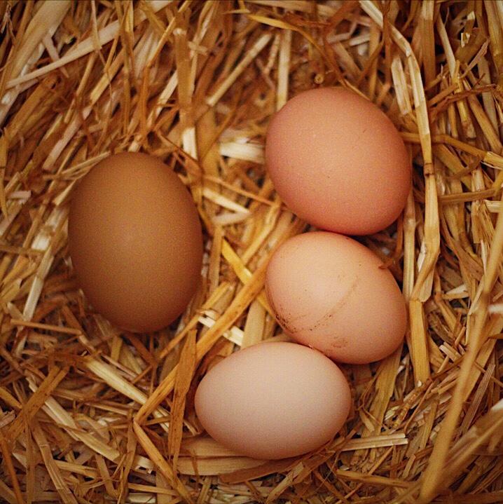 Farm Fresh Eggs From Heirloom Breed Chickens