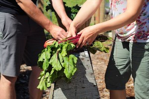 Washing and Bundling Produce for the Market