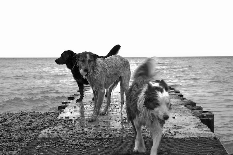 wilson - urban dog toronto 2011
