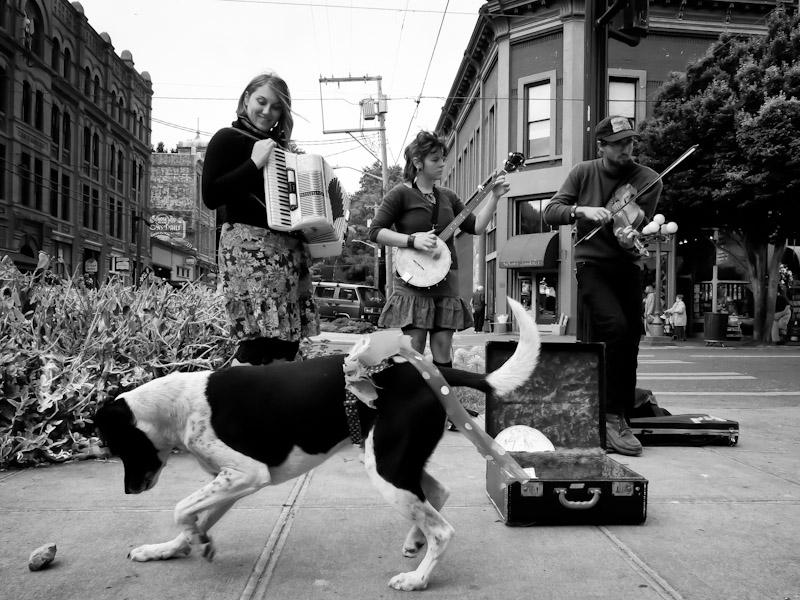 daisy - urban dog port townsend 2012
