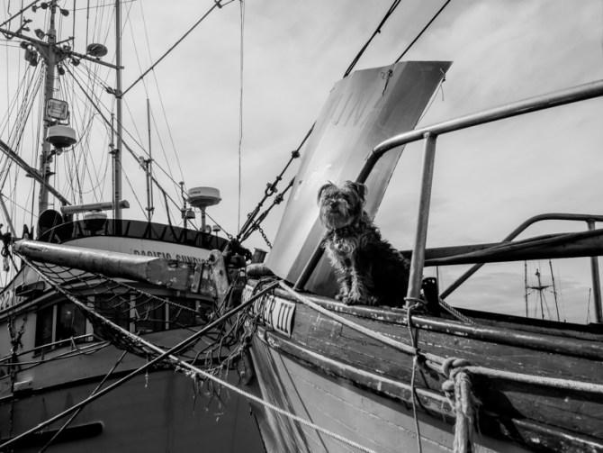 skipper - urban dog steveston 2014