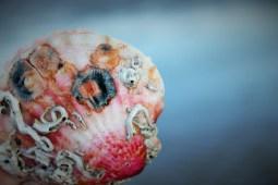 beautiful shell