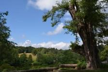 rotwildpark4