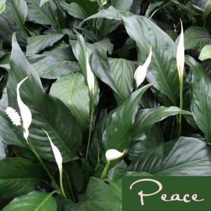 Peace | Sabrina's Admin Services
